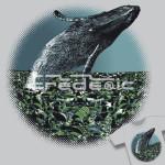 Ecolo-Baleine 01